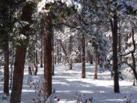 Black Forest Colorado